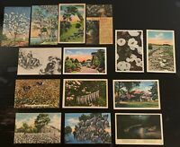 Lot of 14 Original Vintage Postcards - Dixieland, Deep South - Spanish Moss, +