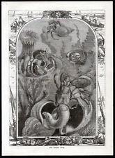 Hermit Crab 1873 décapode crustacés Victorienne Gravure
