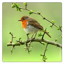 Kühlschrank - Magnet: Rotkehlchen sitzt auf Zweig - Red Breasted Robin