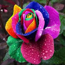 200Pcs colorful Rainbow Rose Flower Seeds Plants s Home Garden