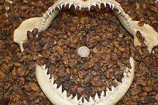 1/2 LB + 2oz FREE Premium  Dried Silkworm Pupae ~  Turtle & Reptiles Food