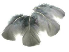 50 Gray B Grade Turkey Plumage T Base Feathers US Seller