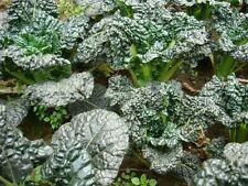 Vegetable Seed - Chinese Cabbage Bok Choy PAK CHOI Seedsorganic heirloom
