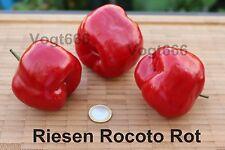 10 Riesen Rocoto Chili Samen Giant Rocoto Baumchili c. Pubescens mehrjährig