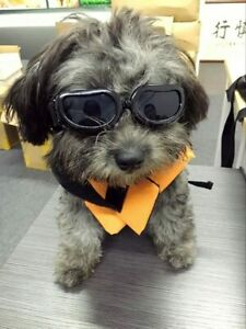 Enjoying Dog Goggles - Small Sunglasses Waterproof Windproof UV Black