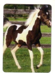 Beautiful  Arabian Pinto Foal -- Modern Wide Linen Swap Playing Card