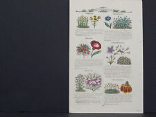 James Vick Seed Catalog Rocheter, N.Y. Flowers/ Vegetables, Hand Colored s#16