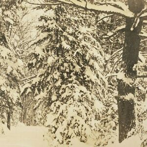 Rockport Maine Snowy Winter Snow Path Trees Road Trail Real Photo RPPC Postcard