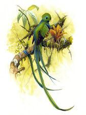 Resplendent Quetzal Print Artist Edition Size 300 by Michael DiGiorgio