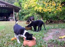 The dogs in the garden are eating food.