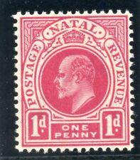 Natal 1904 KEVII 1d deep carmine superb MNH. SG 147b.