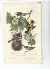 "1978 Vintage AUDUBON BIRDS /""NORTHERN or BALTIMORE ORIOLE/"" Color JUMBO Lithograph"