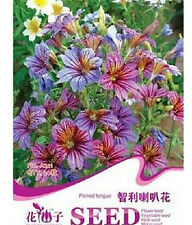 FD1662 Chile Morning Glory Seed Petunia Colorful Garden Flower ~1 Pack 30 Seed✿