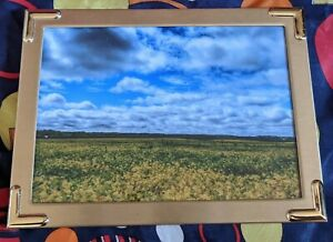 5x7 photograph in bronze colored metal frame. soy bean field Illinois landscape