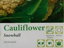 Cauliflower SNOWBALL Seeds (pack of 250) 'Brassica oleracea botrytis' x 250 seed