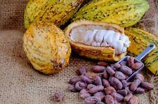 20+ Ceylon Cocoa Seeds For Plant Chocolate Nut Tree Theobroma cacao 100% quality