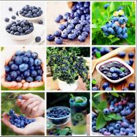 Blueberry Bonsai 100 Pcs Seeds Edible Fruit Organic Dwarf Tree Potted Garden NEW