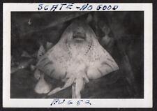 "NIGHTMARE SEA FOOD FREAK-FACE SKATE FISH ""NO GOOD TO EAT"" ~ 1952 VINTAGE PHOTO"