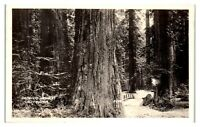RPPC Redwood Highway, CA Real Photo Postcard *5Q15