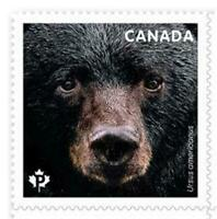 2019 Canada 📭 🐻 AMERICAN BLACK BEAR 🐻🐻 MNH Single Stamp from Booklet 🐻📬