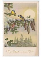 Christmas Card Baby Christmas Winter Snow Bird on Branch Spruce