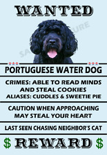 Portuguese Water Dog Wanted Poster Flex Fridge Magnet 2.75 X 4 See Video