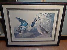 Rare Audubon Print B Havell 1836 Shoveller Duck Plate CCCXXVII Birds of America