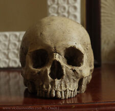 HUMAN SKULL REPLICA (polished bone) full size realistic, plaster of Paris