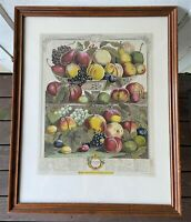 Antique Robert Furber Colored Engraving Print -Twelve Months of Fruit -Sept 1732