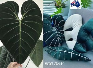 Variegated Monstera Albo/Philodendron Gloriosum/Alocasia Frydek Velvet Cushion