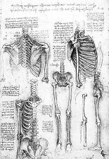 Leonardo Da Vinci Aspects of a Skeleton Anatomy Poster Print Art