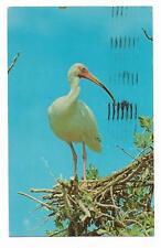 Vintage Birds Chrome Postcard White Ibis