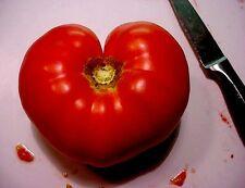 200 PINK PONDEROSA TOMATO Henderson's Lycopersicon Fruit Vegetable Seeds *CombSH