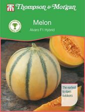 Thompson & Morgan - Vegetable - Melon Alvaro F1 Hybrid - 4 Seeds
