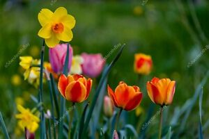 Multicolored nice spring flowers DIGITAL ART PHOTO PICTURE JPEG BACKGROUND