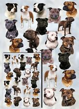 Staffordshire Bull Terrier Dog Gift Wrapping Paper By Starprint