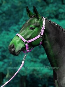 Halter Cali For Horses IN Nylon Double Adjusting Headcollars Halfter