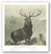 Art Print The Monarch Sir Edwin Henry Landseer
