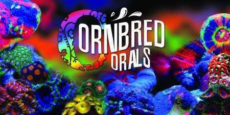 Cornbred Corals