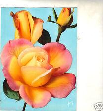 Fleurs - cpsm - Rose Grand'Mère Jenny (Meilland)  (H5782)