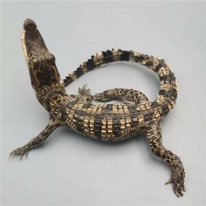 1pcs real small crocodile specimen30cm- 35cm collectible decoration crafts DIY