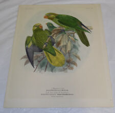 1896 Antique COLOR Print///MEYER'S LORY, and the LORY OF BONTHAIN (PARROTS)