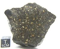 NWA 13309 LL3.15 Primitive Chondrite Meteorite Rare, Type 3 Meteorite
