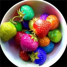 100PCs Fruit Seeds Rainbow Strawberry Seeds Colorful Strawberry Seeds 100PCs ♫