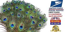 New set Peacock Tail Feathers Natural Real About size 10-12 Inches- 50 Piece