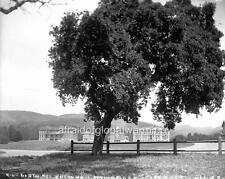 "Photo 1890s Univ Calif Berkeley ""4 Buildings"""