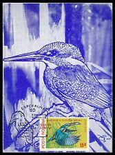 Romania Mk 1980 Kingfisher Kingfisher Maximum Card Carte Maximum Card Mc cm al78