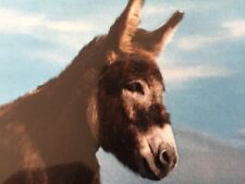 "Postcard-Unused Ireland, Meet ""Daire"" The Young Donkey (We Named Him)"