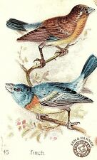 1890's Arm & Hammer Beautiful Birds Finch Victorian Trade Card P135