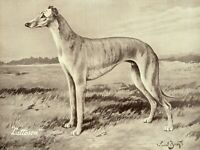 1930s Antique GREYHOUND Dog Print Ward Binks Art Champion Lattoson 3857m